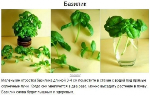 8 овощей, которые можно купи…