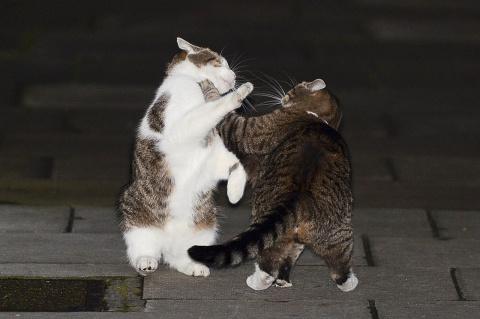 Дела котовьи