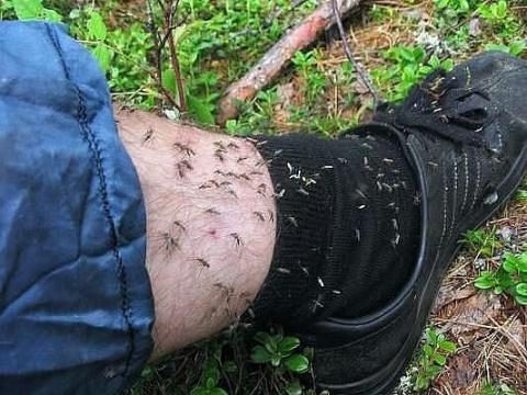 Средство от комаров и мошек …