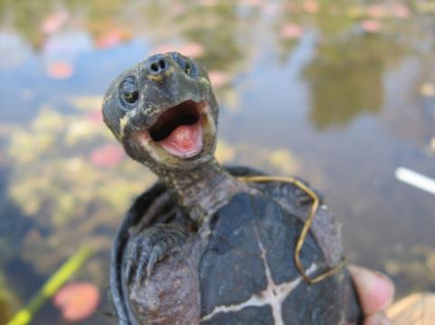 Черепахи плохого не посоветуют
