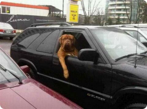 Собаки-угонщики