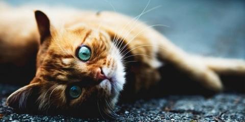 Сколько живут кошки и как продлить жизнь своего питомца