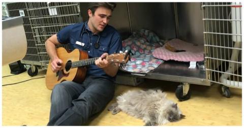 Заботливый ветеринар поет песни для своих четвероногих пациентов