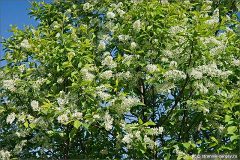 О деревьях весной