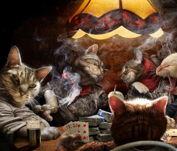 Что делают кошки, когда хозя…