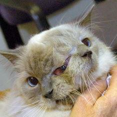 Умер знаменитый кот с двумя мордами