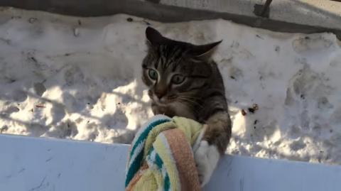 Кот, который не ищет легких …