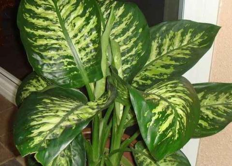 Не отравитесь комнатным растением!