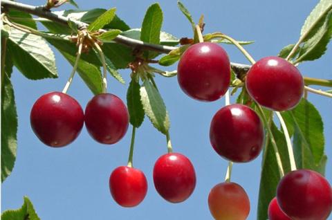 Как вести садовый дневник - личный опыт садовода Подмосковья