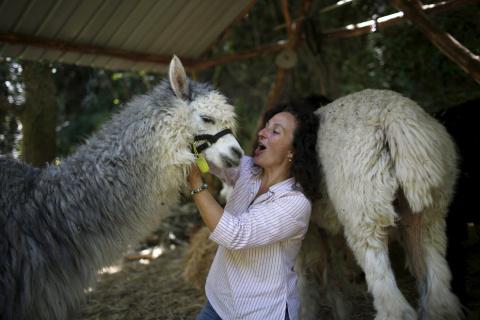 Жизнь среди альпак