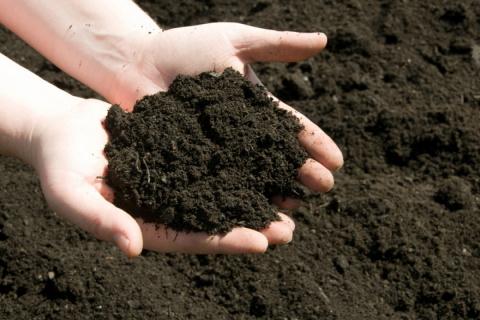 Как обеззаразить почву для рассады и цветов