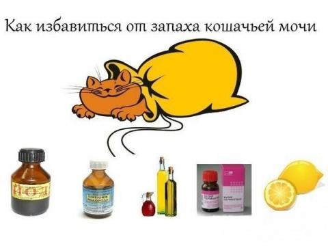 Устраняем кошачий запах