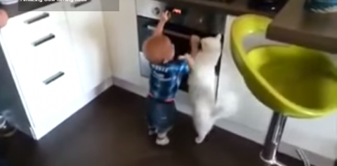 Видеохит: Российский кот спас ребенка от духовки