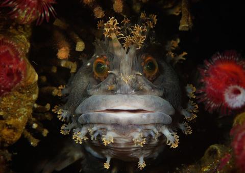 Удивительный мир, скрывающийся под водой...