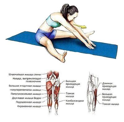 5 элементарных упражнений на растяжку