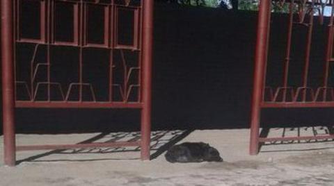 Кировчанка бросила собаку на остановке и уехала: животное ждет хозяйку уже 2 дня.
