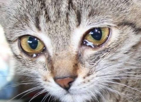Вы жалеете бездомных кошек?