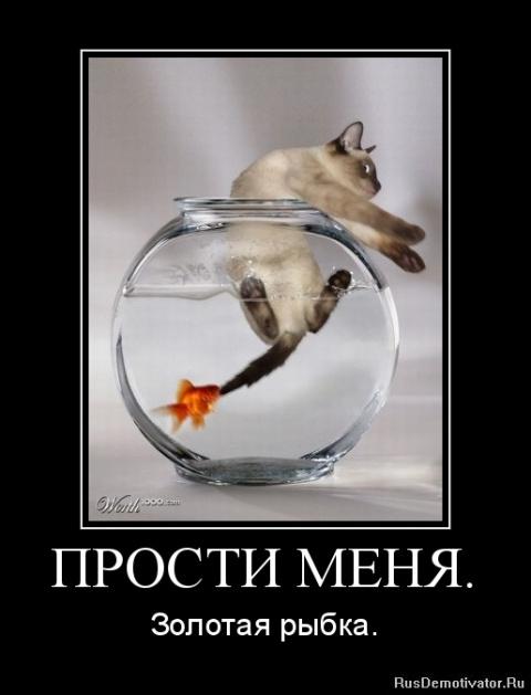 демотиваторы про золотую рыбку отдельное спасибо