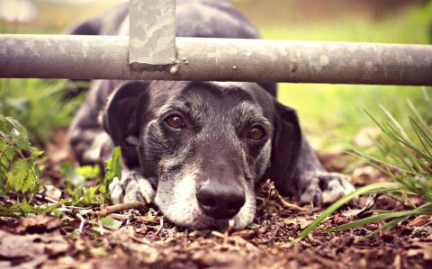 Записки ветврача: Бросая животных на даче, вы обрекаете их на гибель