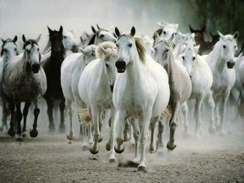 Интересные факты из жизни лошадей