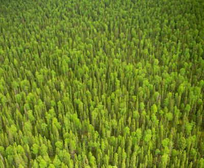 23 фото девственных лесов Ко…