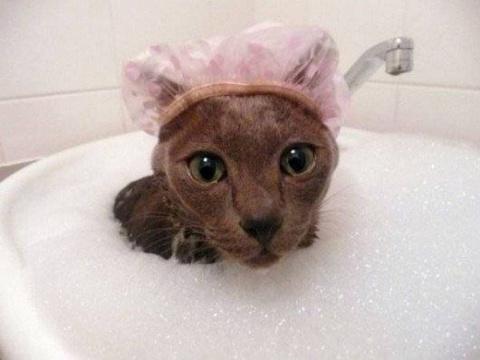 """""""Сломанные"""" коты, которые об…"""