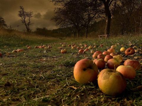 5 способов хранения яблок