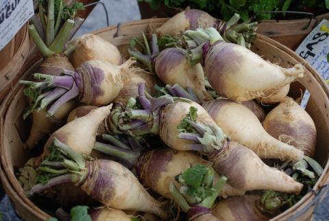Брюква: целебный сибирский корнеплод