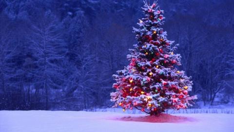 8 советов по выбору и установке Новогодней елки!