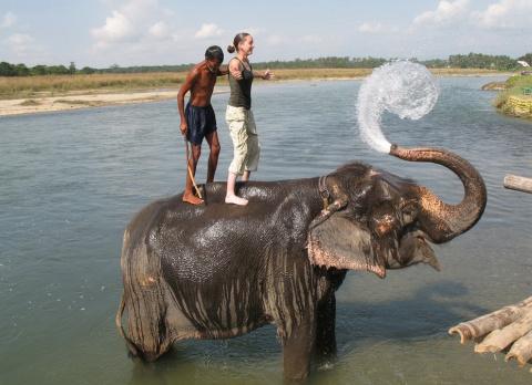 Жизнь слонов - какая она?