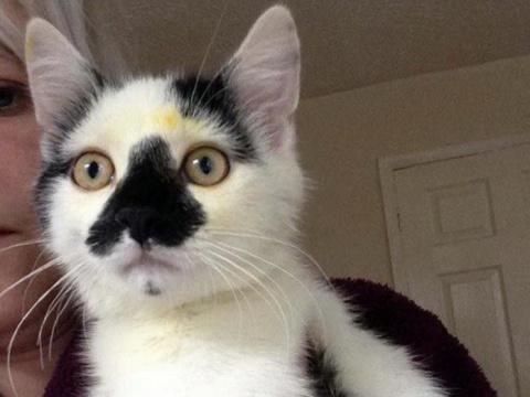 Если у вас есть кошка, ни в …