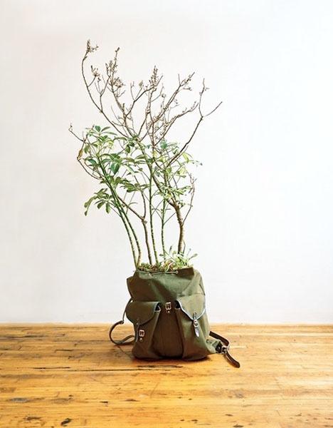 Беззатратный способ разводить цветы