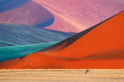 Дикая Африка Алекса Бернаскони