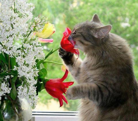 Коты-садоводы, коты-флористы ...  ))