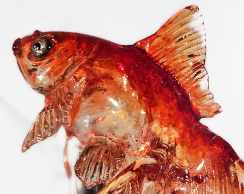 Съедобная золотая рыбка