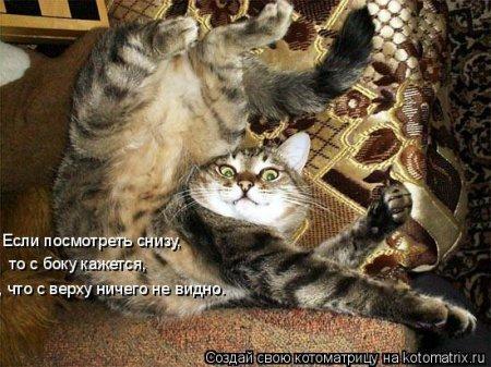 рассказы о кошках