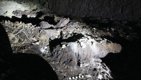 В Египте обнаружено массовое захоронение восьми миллионов мумий собак
