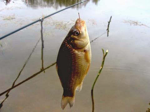 Какую рыбу лучше всего ловить весной