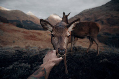 Дикие животные на расстоянии…