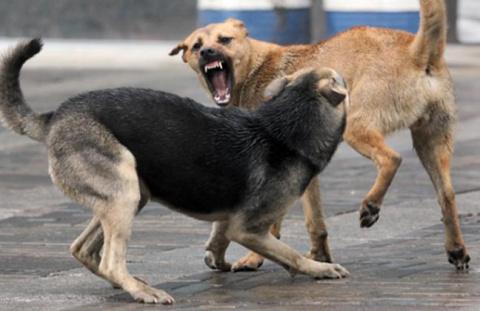 Бродячие псы спасли девочку …