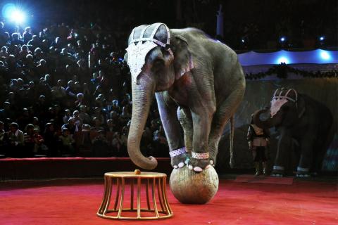 Почему цирк с животными – эт…