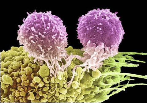 Что такое иммунитет? Часть 3