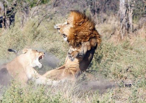 Внутренние разборки в царско…