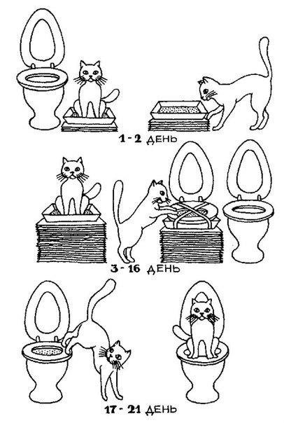 Как приучить кошку к унитазу…