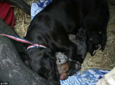 Бездомный пёс спас десять замерзающих щенков и их мать, приведя к ним спасателей!