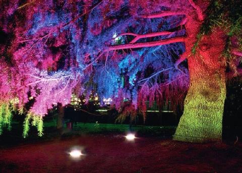 20 простых и эффектных идей по освещению летнего сада