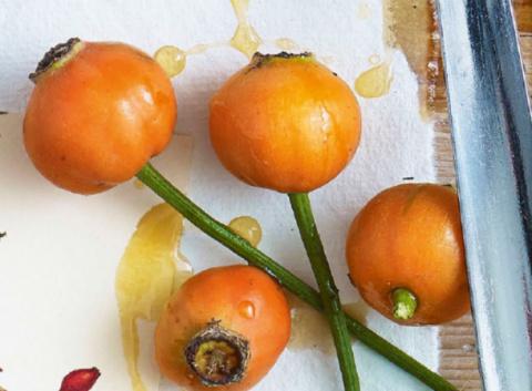 Лечебные растения в вашем саду