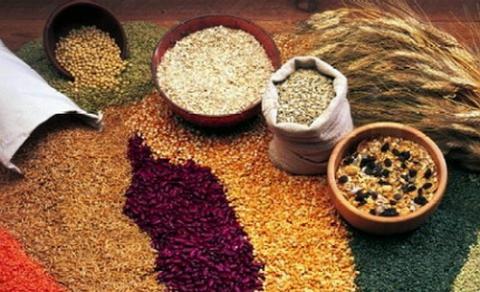 Чем сортовые семена отличаются от гибридных