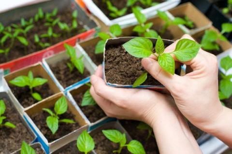 Зимние посевы: как вырастить…