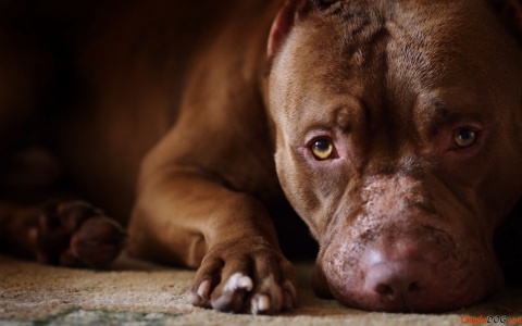 Поступок Собаки (1 фото)